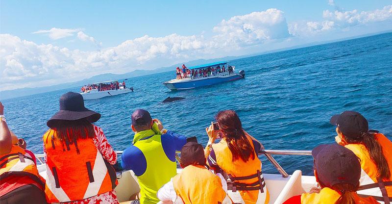 ballenas-jorobadas-en-samaná